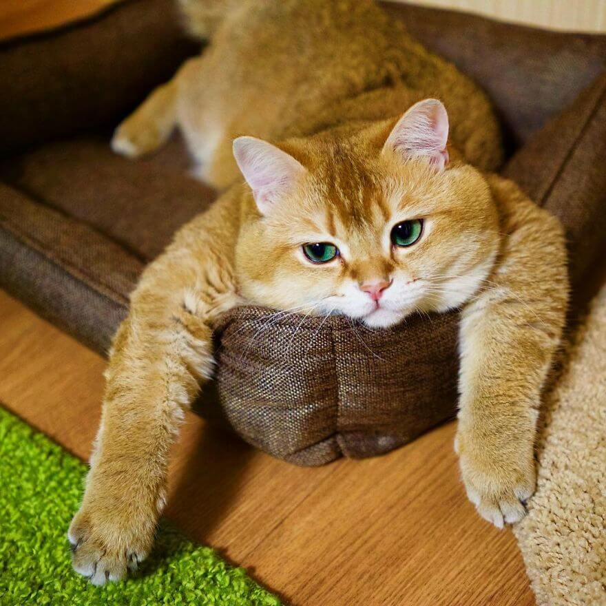 hosico the cat 4 (1)