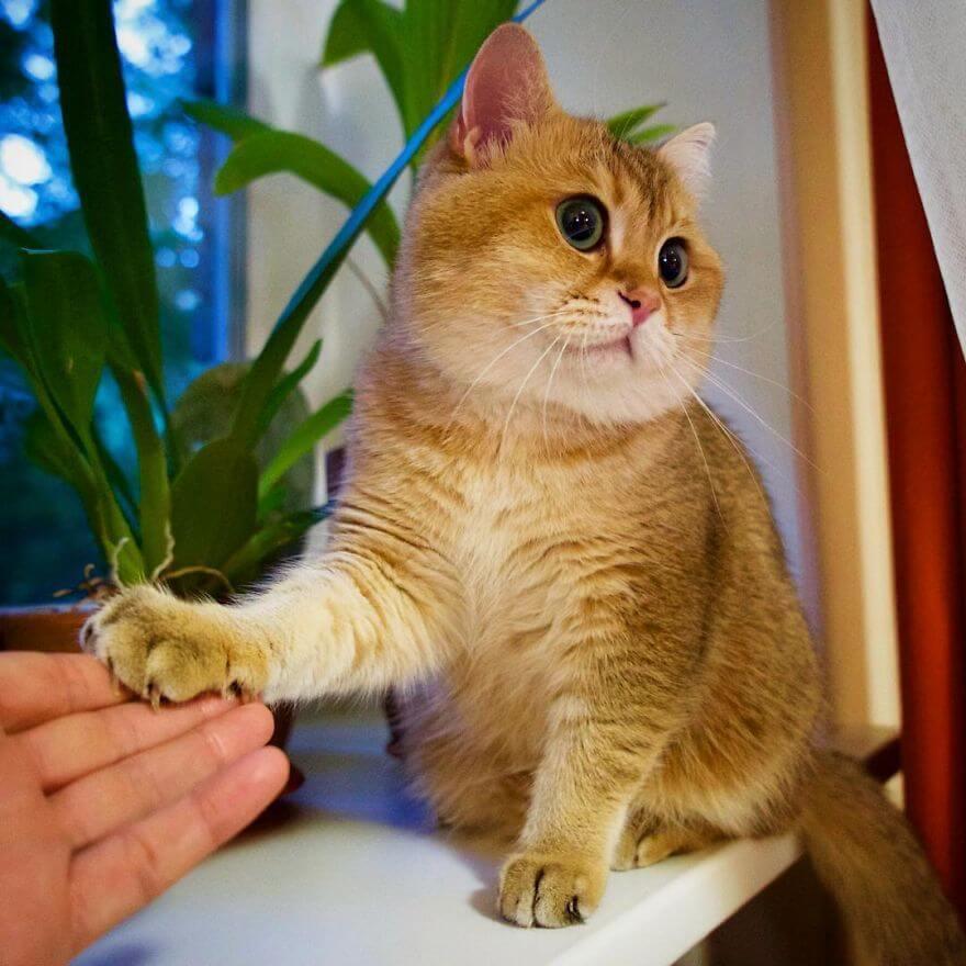 cute cat 40 (1)