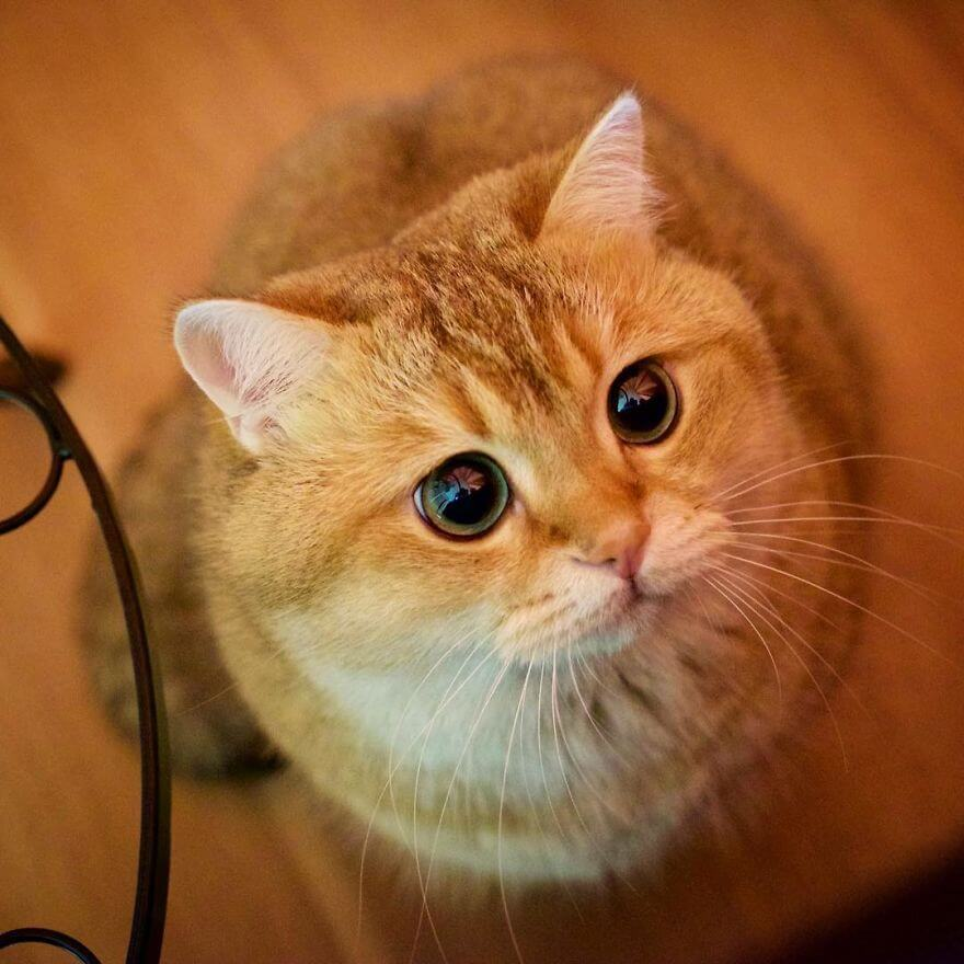 hosico the cat 6 (1)