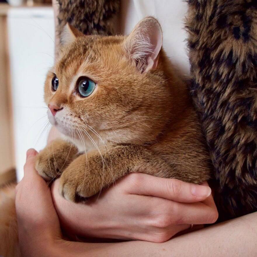 hosico the cat 8 (1)