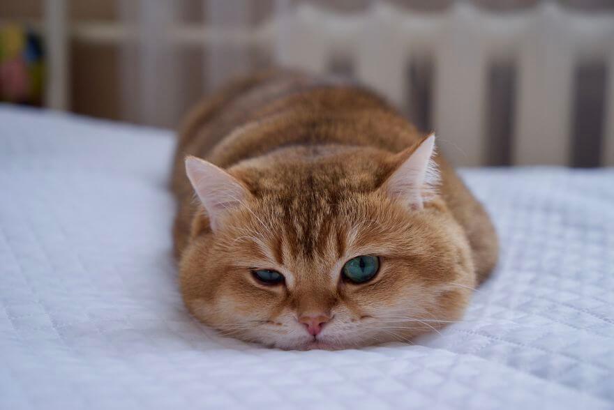 hosico the cat 9 (1)