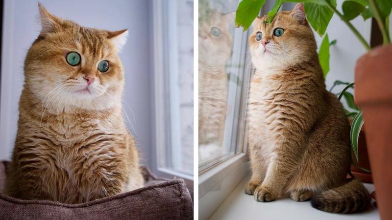 hosico cat feat