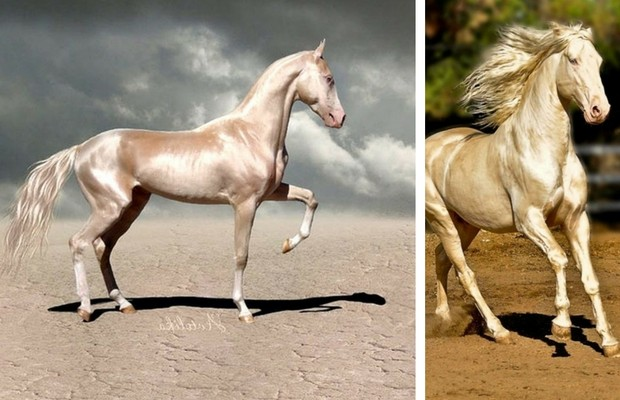 most beautiful horse in the world feat