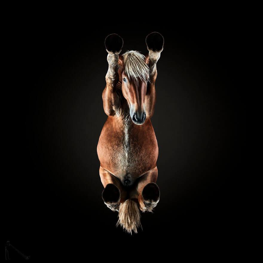 under horse (1)