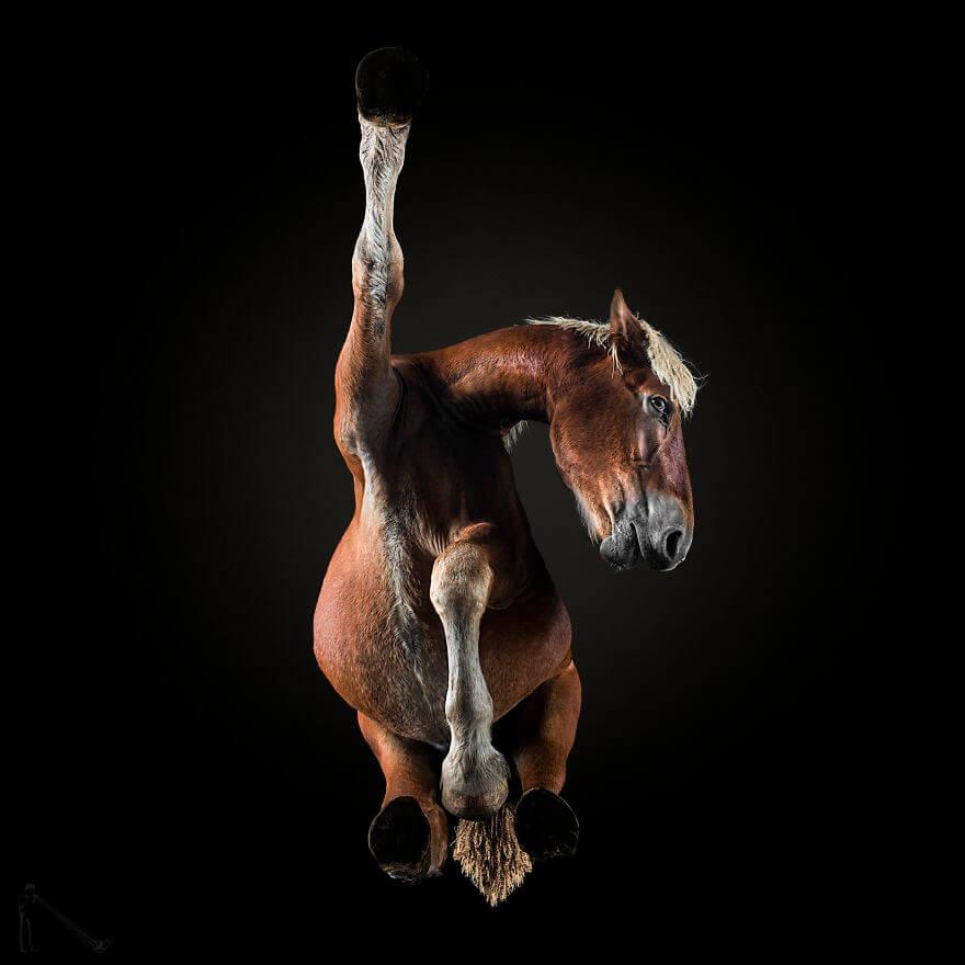 under horse 3 (1)