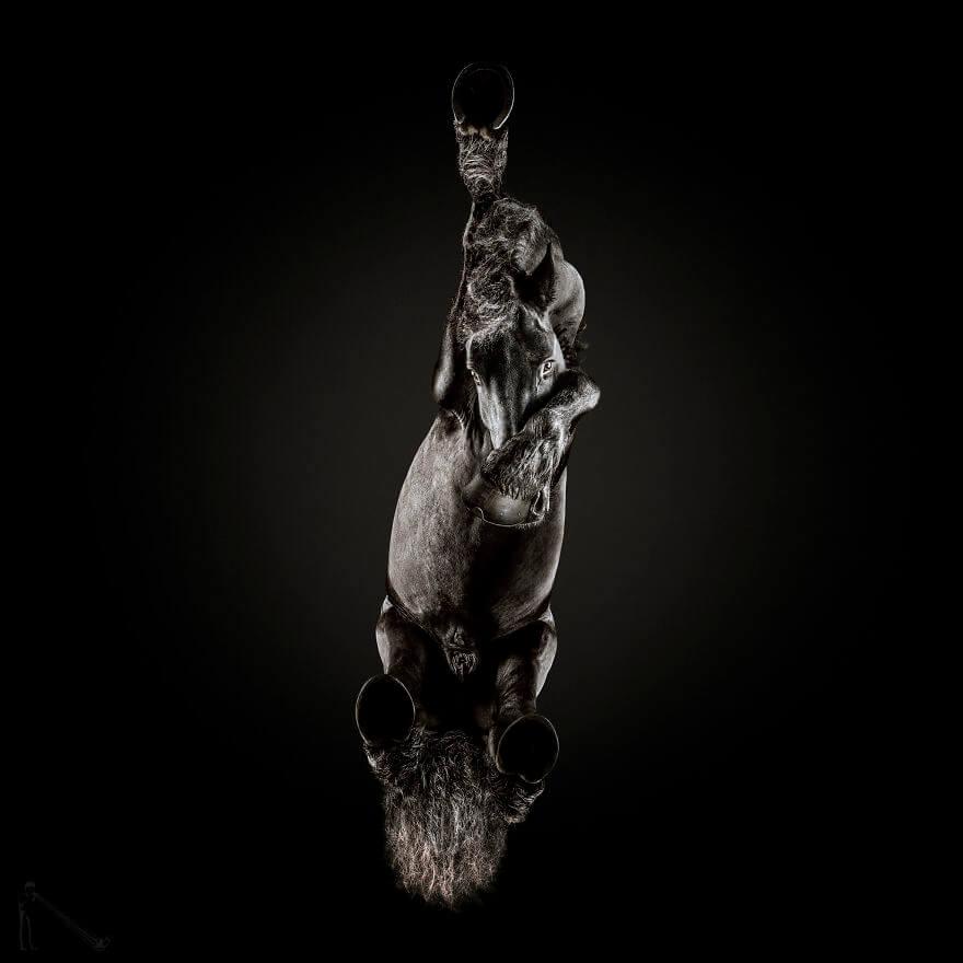 under horse 4 (1)