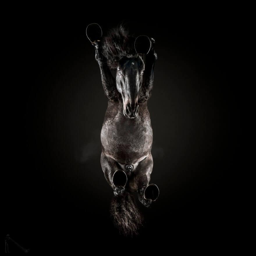 under horse 5 (1)