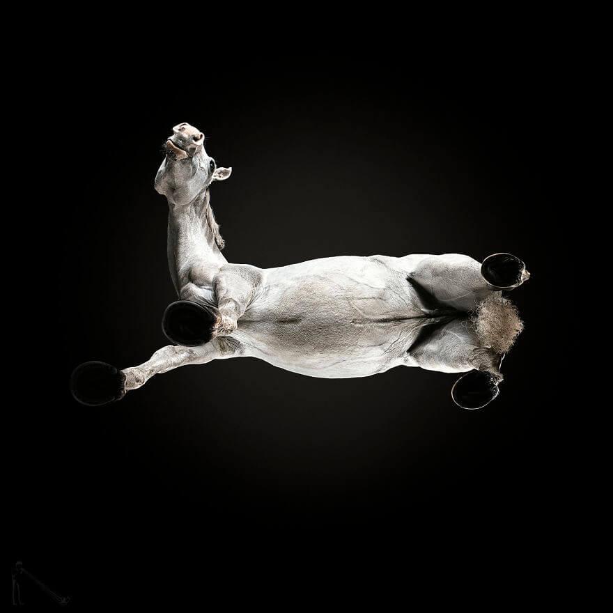 underneath horse 8 (1)