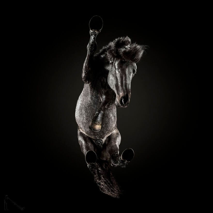 underneath horse 9 (1)