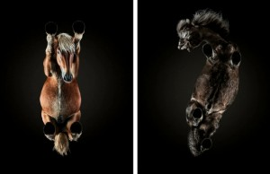 under horse project feat