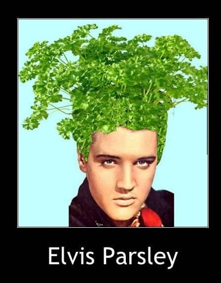 vegetable memes 24