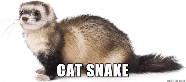 alternate names for animals 36 (1)