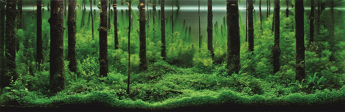 aquascape (1)