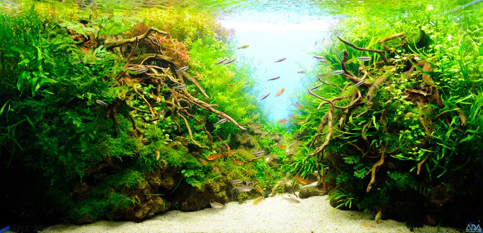 aquascaping 12