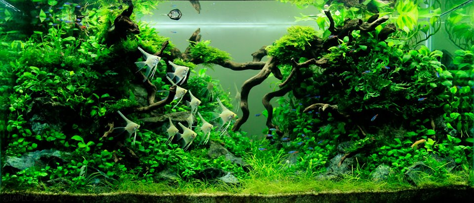 underwater landscaping 13
