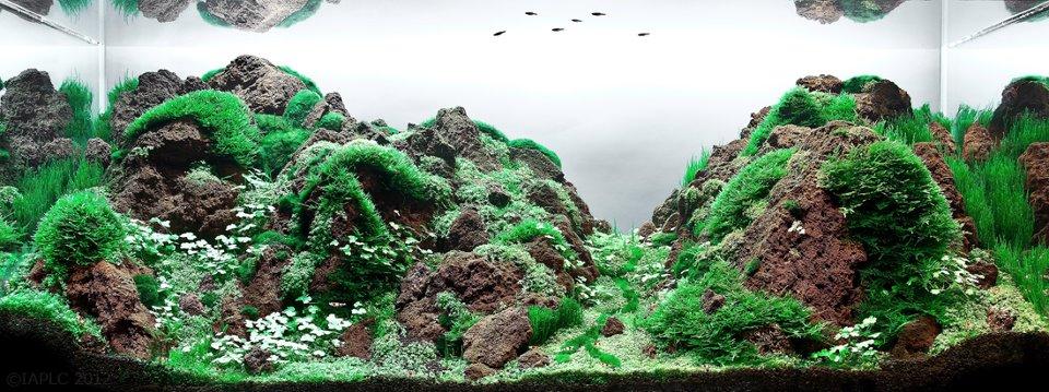 underwater landscaping 14