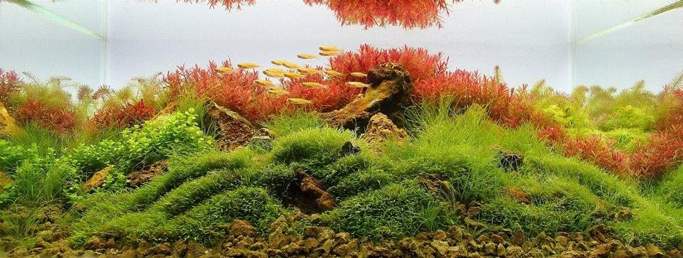 underwater landscaping 16