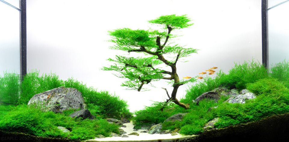 underwater landscaping 17