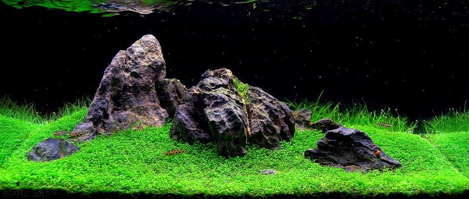 underwater landscaping 18