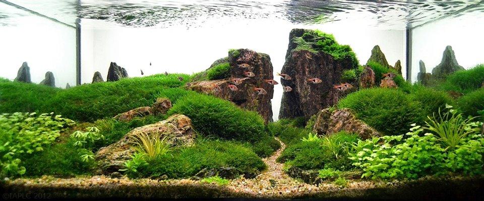 underwater landscaping 19