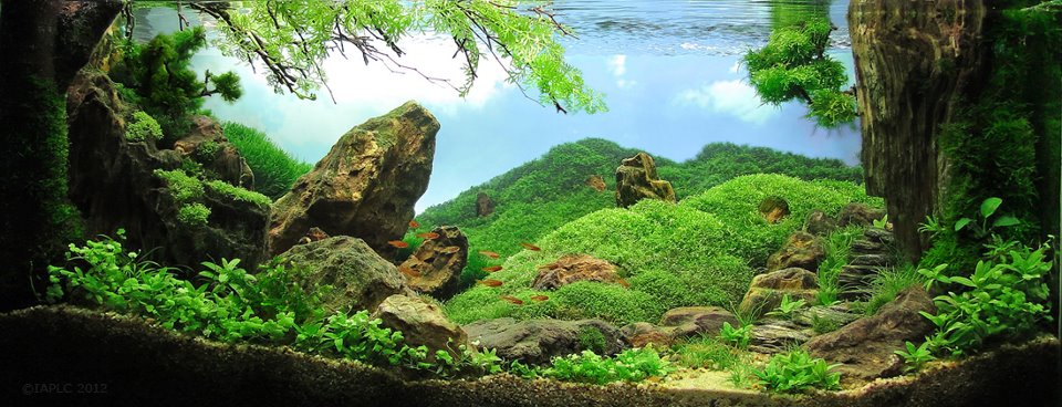 underwater landscaping 20