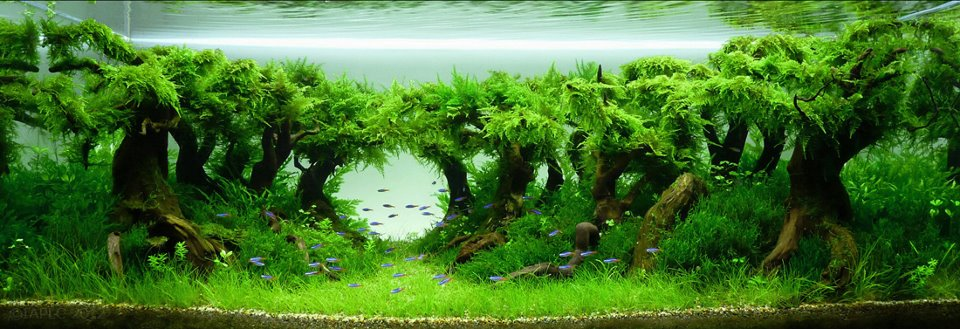 aquascape 21