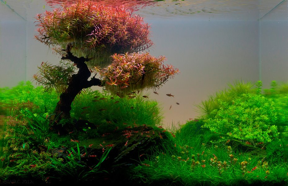 22 amazing underwater aquascape landscaping pictures that feature entire worlds inside an aquarium - Aquascape espana ...