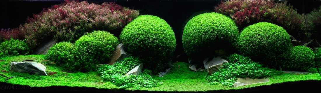 aquascaping 8 (1)