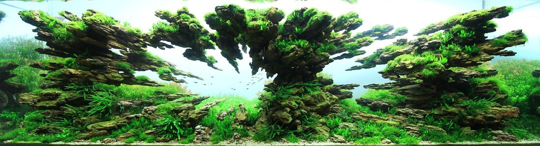 aquascaping 9 (1)