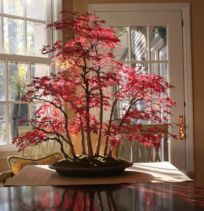 bonsai trees (1)