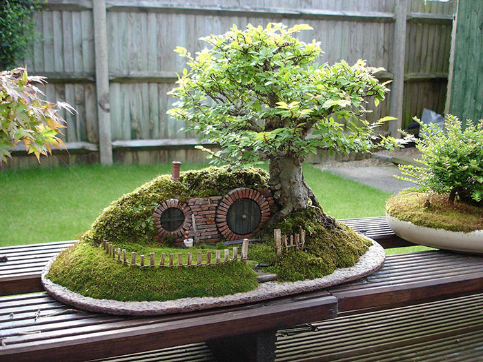 bonsai tree pictures 11 (1)