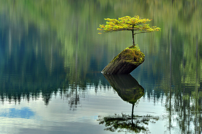 bonsai tree pictures 12 (1)