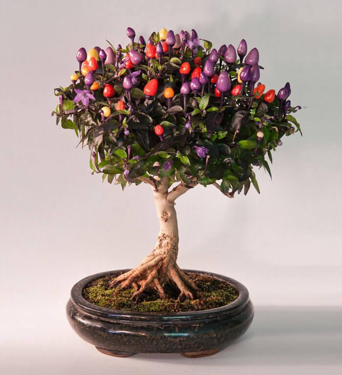 bonsai tree pics 13 (1)