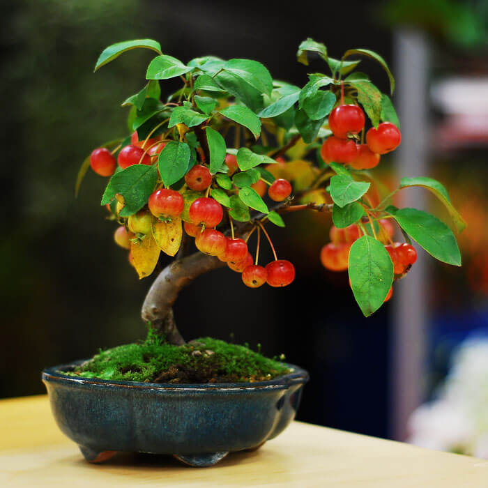 bonsai tree pics 15 (1)