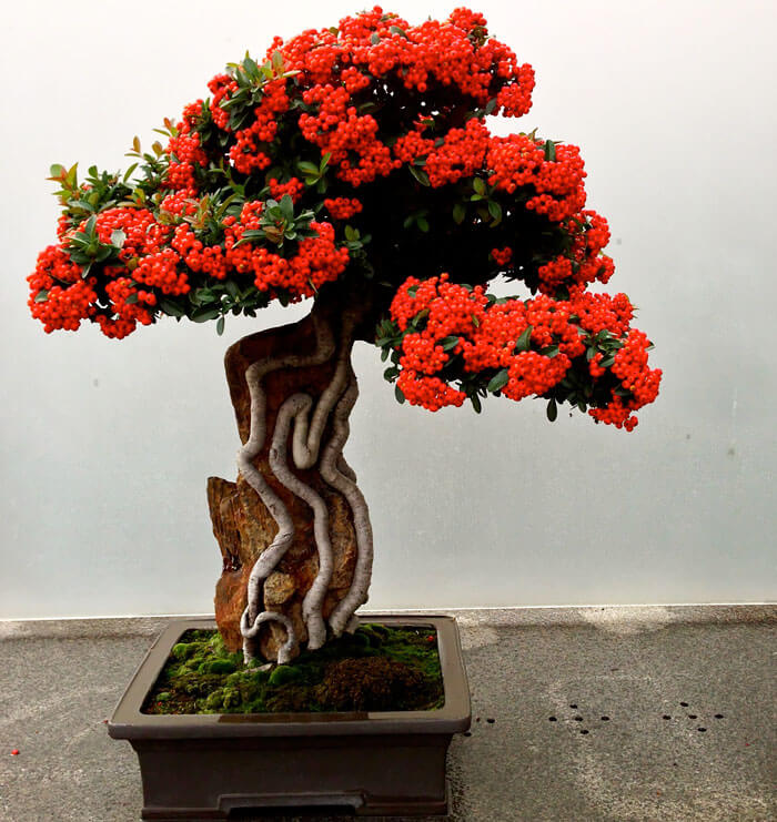 bonsai tree pics 18 (1)