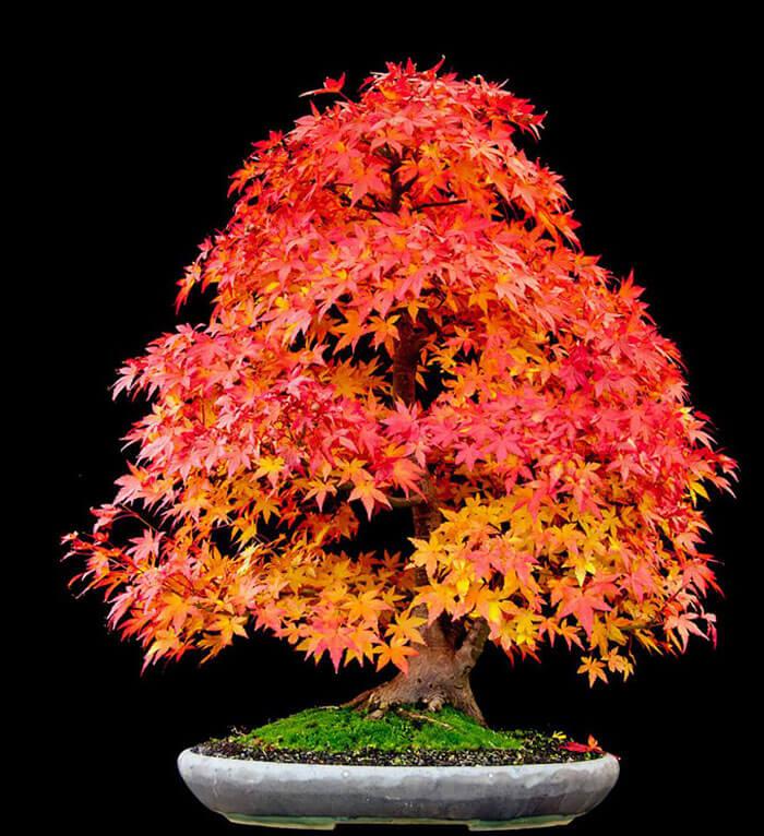 bonsai tree pics 19 (1)