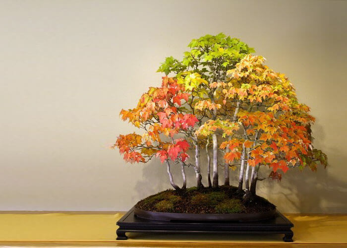 bonsai tree pics 21 (1)