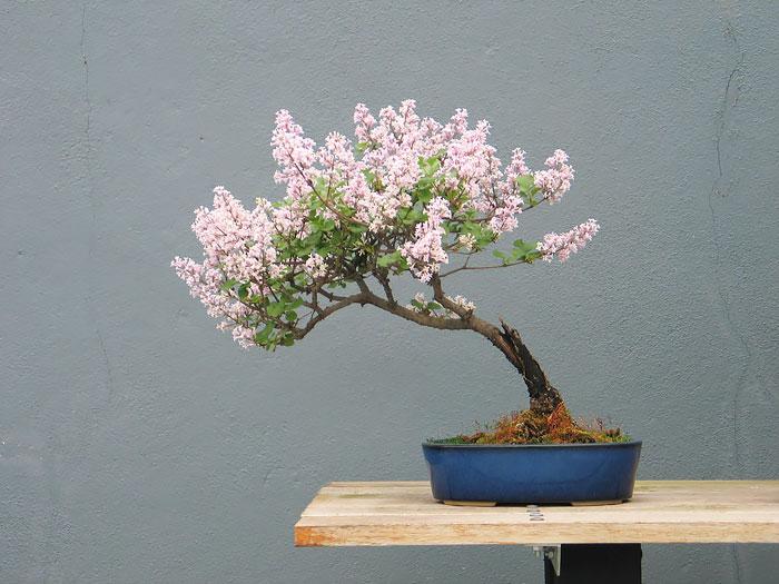 penzai trees 23