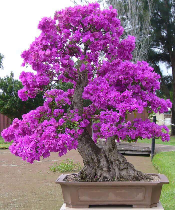 penzai trees 25 (1)