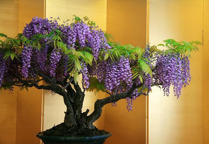 penzai trees 26 (1)