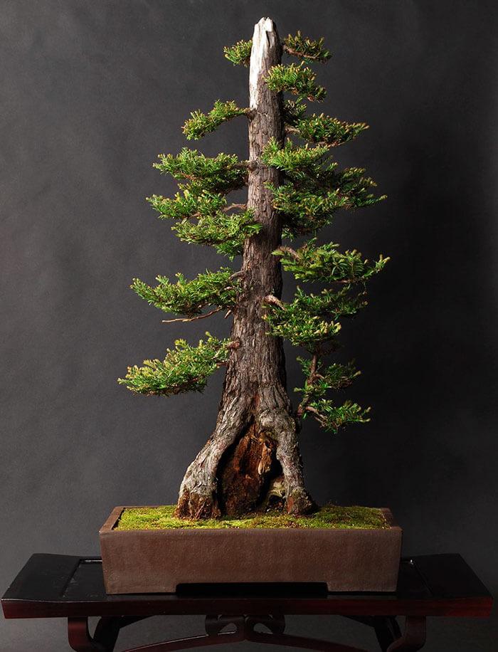 penzai trees 27 (1)
