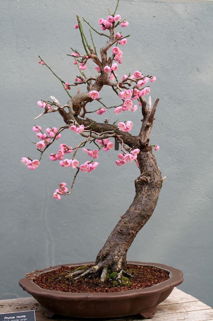 penzai trees 28 (1)