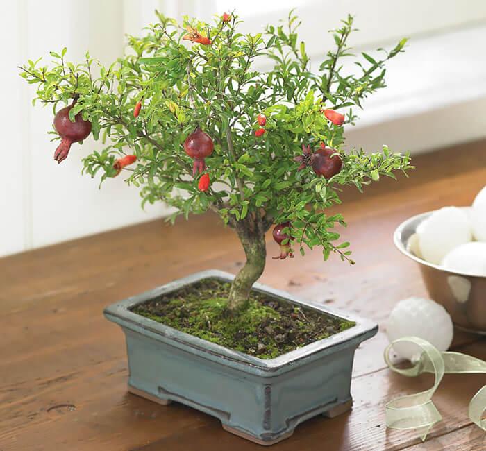 penzai trees 31 (1)