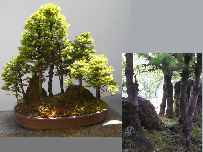 penzai trees 32 (1)