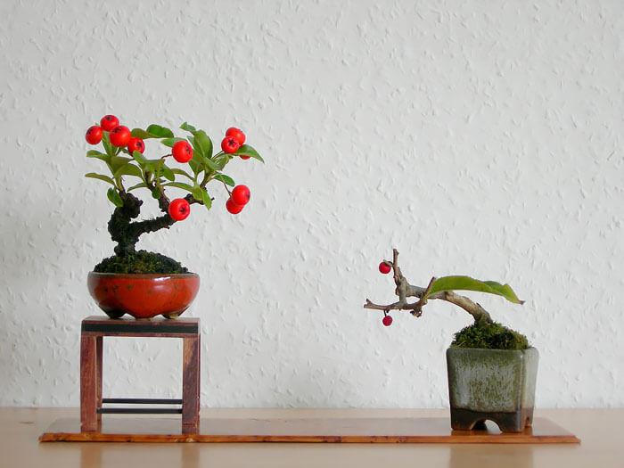 penzai trees 33 (1)