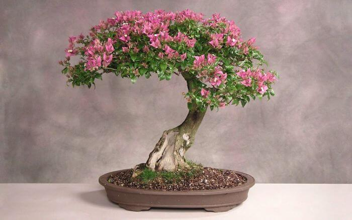 penzai trees 35 (1)