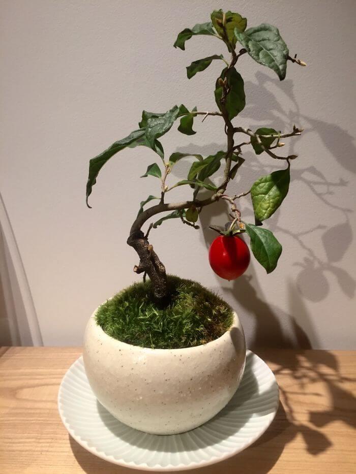 penzai trees 36 (1)