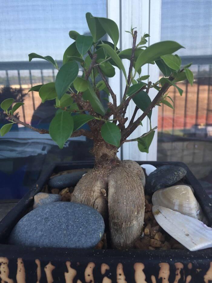 penzai trees 37 (1)