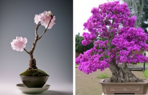 bonsai trees feat