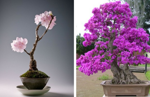38 Bonsai Trees That Are A Perfect Tiny Version Of Nature